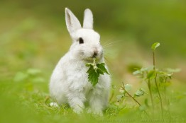 Time To Break The 'White Rabbit Habit'