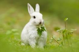 Time To Break The 'White Rabbit Habit'